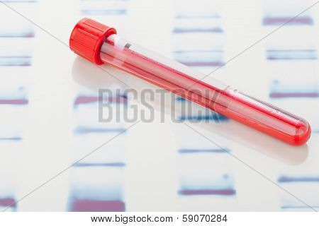 DNA Blood Sample