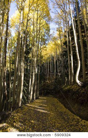 Fall Aspen Road
