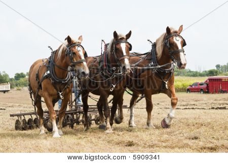 Horse-drawn Farming Demonstrations