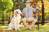Senior man sitting on a bench with his labrador retriever, in a park poster
