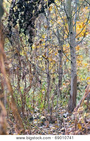 Background Autumn Forest