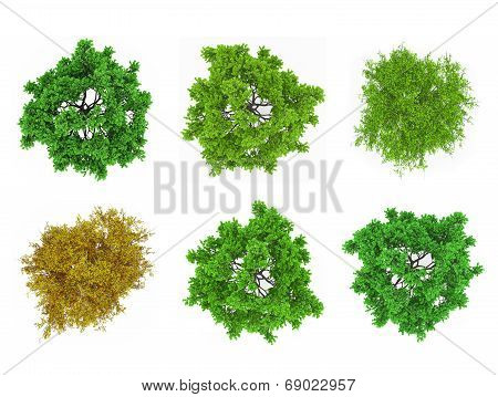 Tree Tops Isolated