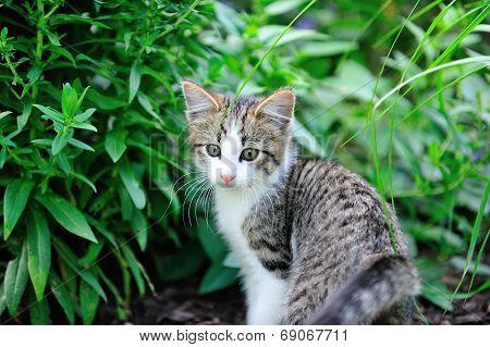 Young kitten in garden