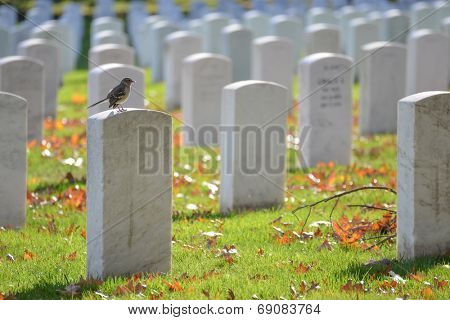 Arlington National Cemetery in Autumn - Washington D.C. United States