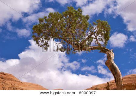 Single tree on Corona Arch Trail