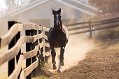 loosing horse running towards the camera poster