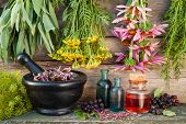 bunches of healing herbs on wooden wall mortar bottles and berries herbal medicine poster