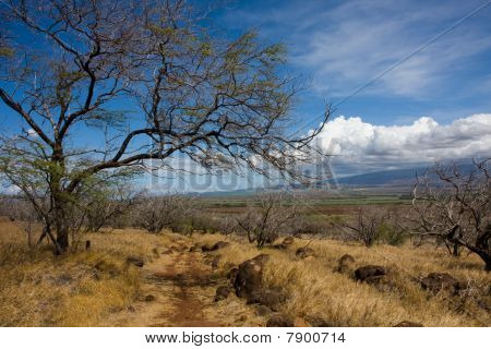 A Trail Under The Hot Hawaiian Sun