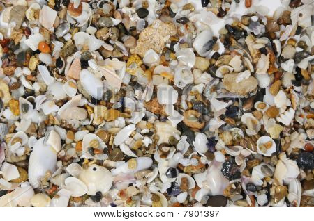 background made with a pile of seashells poster