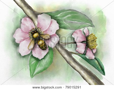 Flower composition with a bee. Original watercolor.
