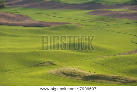 Hills And Fields Of The Palouse