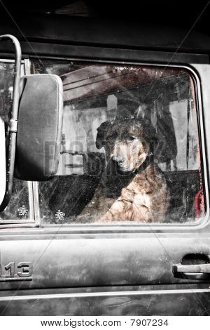 Lonely Guard Dog In A Dirty Truck