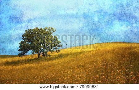 A single oak tree in the midst of flower filled meadow