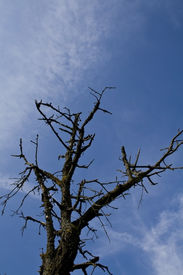 A Lonely Dry Tree