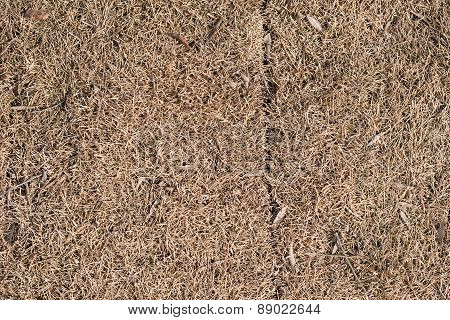Dry brown lifeless grass