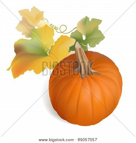 Orange Pumpkin with multicolor leaves - vector