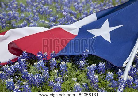 Texas Flag Among Bluebonnet Flowers On Bright Spring Day