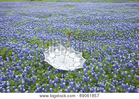 White Lace Parasol Upside Down In A Field Of Texas Bluebonnets