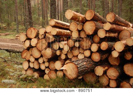At A Logging Site