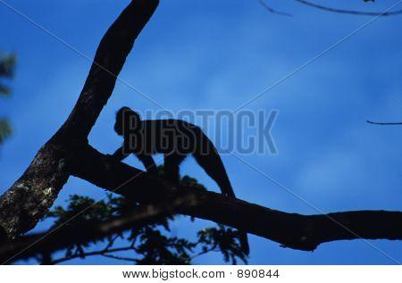 Blue Monkey Silhouette