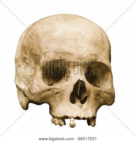 Human Skull Set Against A White Background