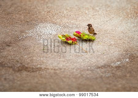 Little Sparrow, Stealing Food From An Offering To The Gods