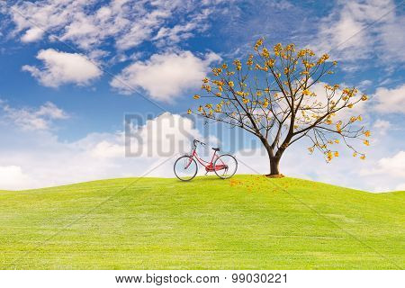 Silk Cotton Flower Tree on Green Grass Field