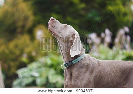 The Dog Sniffs The Air