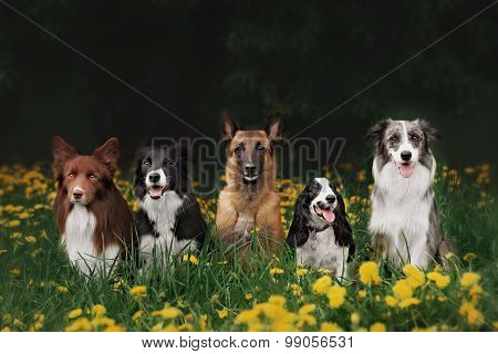 Four Dogs Sitting In The Park