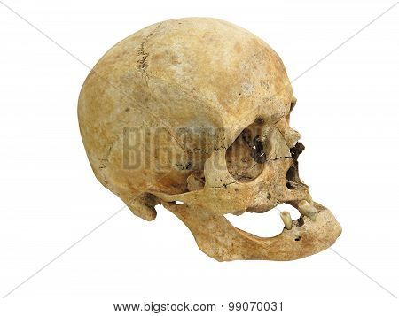 Old Archaeological Find Human Skull Cranium Isolated On White