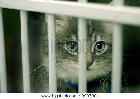 Young Kitten In Cage