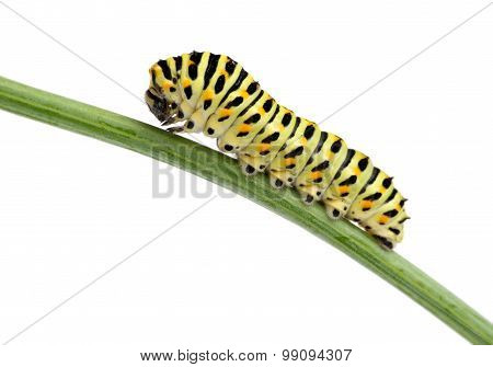 Side view of pest green caterpillar isolated on white
