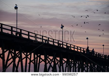 Earltbirds