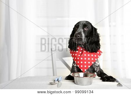 Dog looking at plate of kibbles on dining table poster