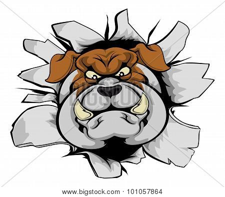 Bulldog Mascot Smashing Out