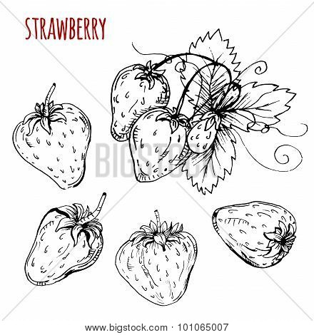 Set strawberry drawing. Strawberry on a white background. Vector