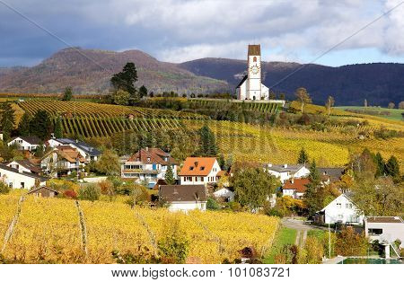 Vine yard region