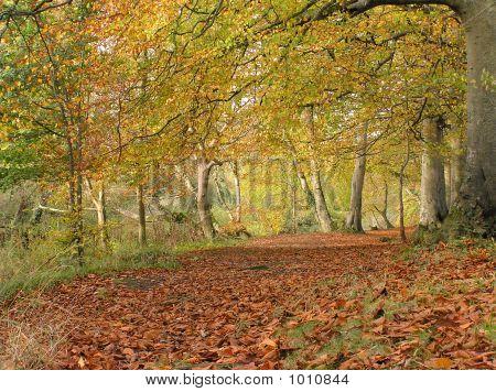 Beech Forest 2