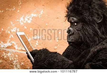 Gorilla With Tablet - Concept Of Animal Monkey Adaptation To New Modern Life Technologies