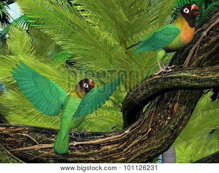 The Black-cheeked Lovebird is a small parrot with mostly green coloring and is found in Zambia Africa. poster