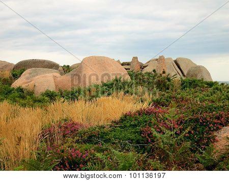 Rocks and plants at Cote de Granite Rose, Brittany, France poster