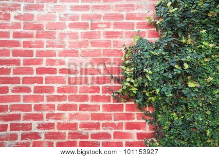 Background Brick Wall With Vine Branches.