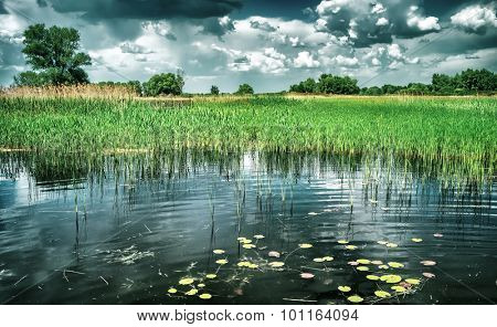 Beautiful pond landscape, amazing view of many different water-plant in the lake, beauty of wonderful nature of Eastern Europe, Ukraine poster
