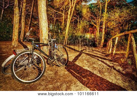 Bikes In The Forest At Night