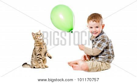 Cheerful child and curious cat Scottish Straight
