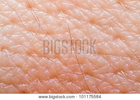 Macro of human skin on the hand wrist poster