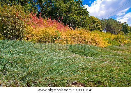 Autumn in colours