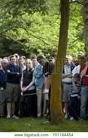 WENTWORTH, ENGLAND. 22 MAY 2009.Paul Casey (GBR) playing from the trees during the 2nd round of the European Tour BMW PGA Championship.