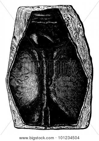 The first fish, Devonian period, Pteraspis rostratus, vintage engraved illustration. Earth before man - 1886.