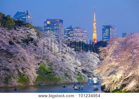 Beautiful sakura cherry blossom light up and Tokyo Tower landmark at Chidorigafuchi Tokyo